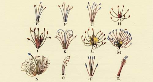 Linnaeus_systema_naturae-